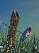 Barbed Wire Paintings - Blue bird on fence by Linda Larson
