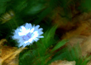 Forest Photographs Prints - Blue Blurred Flower Print by Tam Graff