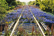 Bonnets Framed Prints - Blue Bonnets on Railroad Tracks Framed Print by Jeremy Woodhouse