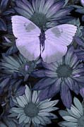 Butterfly  Paintings - Blue Butterfly by JQ Licensing