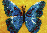 Animals Glass Art Metal Prints - Blue Butterfly Metal Print by Natalya A