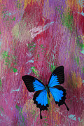 Blue Walls Prints - Blue butterfly on colorful wooden wall Print by Garry Gay