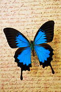Blue Butterflies Posters - Blue butterfly on old letter Poster by Garry Gay