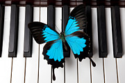 Play Prints - Blue butterfly on piano keys Print by Garry Gay