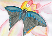 Watercolors Drawings - Blue Butterfly by Sheba Goldstein