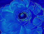 Computer Generated Flower Prints - Blue By You  Print by Kim Galluzzo-Wozniak