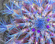 Colorful Art Photos - Blue Cactus by Rebecca Margraf