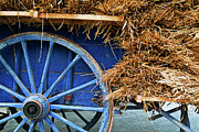 Old Wagons Posters - Blue cart full with load of straw Poster by Sami Sarkis