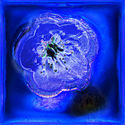 Photo Manipulation Originals - Blue cherry blossom by Li   van Saathoff