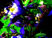 Abstract Columbine Prints - Blue Columbine Fantasy Print by Beth Akerman