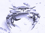 Pincher Framed Prints - Blue Crab  Framed Print by Betsy A Cutler East Coast Barrier Islands