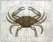Technical Mixed Media Metal Prints - Blue Crab Metal Print by Charles Harden