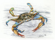 Blue Drawings - Blue Crab by Jana Goode