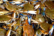 Mounted Fish Prints - Blue Crabs Print by France Laliberte
