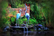 Crane Prints - Blue Crane Print by Perry Webster