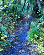 Marin County Digital Art Posters - Blue Creek on Mt Tam Poster by Ben Upham