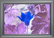 Flower Still Life Prints Prints - Blue Crystal Print by Barbara S Nickerson