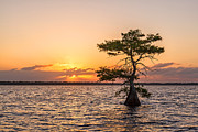 Claudia Domenig Prints - Blue Cypress Lake Sunrise Print by Claudia Domenig