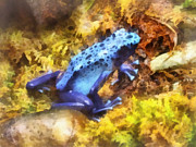Spotted Art - Blue Dart Frog by Susan Savad