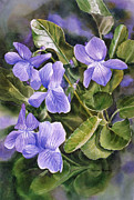 Watercolor Art Paintings - Blue Dog Violets by Sharon Freeman
