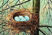 Frank Wilson Framed Prints - Blue Eggs In Nest Framed Print by Frank Wilson