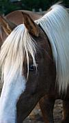 Forelock Photos - Blue Eye by Kim