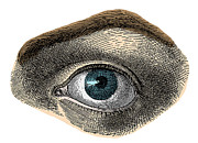 Sight See Prints - Blue Eye Print by Science Source