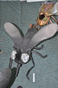 Insect Sculptures - Blue Eyed Black Fly by Michael Jude Russo