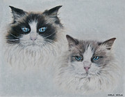 Cat Portraits Pastels Prints - Blue Eyed Cats Print by Marla Saville