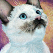 Siamese Kittens Prints - Blue Eyed Prayer Print by Beverly Fuqua
