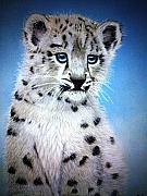 Leopard Pastels - Blue Eyes by Rosanna Maria