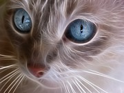 Whiskers Prints - Blue Eyes Print by Tilly Williams