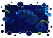 Blue Fish Print by Carol Groenen