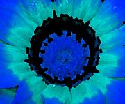Fotography Posters - Blue Flower Poster by Diana Maria Parra