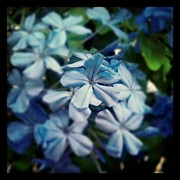 Floral Art - #blue #flowers #flower #garden by Cristina Sferra