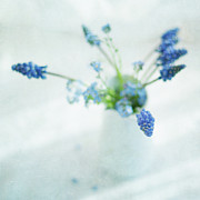 White Grape Photos - Blue Flowers In White Jug by Jill Ferry