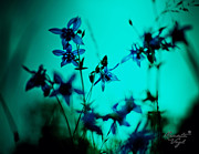 Blue Flowers Photos - Blue Flowers by Renata Vogl