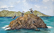 Boobies Paintings - Blue Footed Boobies in Galapagos by Bonnie Sue Schwartz