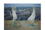 Blue-footed Booby Framed Prints - Blue Footed Boobys Mating Dance Framed Print by Carmen Durden