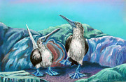 Boobies Paintings - Blue Footed Boogie by Barbara Struber