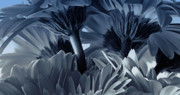 TONY GRIDER - Blue Gerbera Bouquet