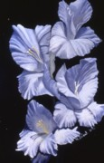 Gladiolus Paintings - Blue Glads by Mary Erbert