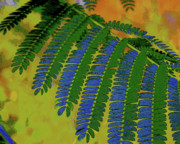 Tracy Daniels - Blue-Green Fronds