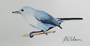 Fauna Originals - Blue Grey Gnatcatcher by Jason M Silverman