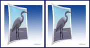 Stereoscopy Photos - Blue Heron - Gently cross your eyes and focus on the middle image by Brian Wallace
