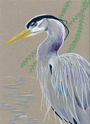 Blue Heron Drawings Prints - Blue Heron Print by Anastasia Smith