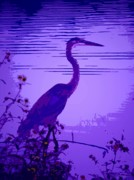 Harmonics  Framed Prints - Blue Heron... Framed Print by Arthur Miller