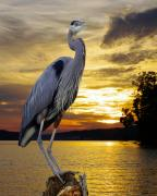 Wrens Digital Art - Blue Heron At Sunset by Ron Kruger