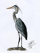 Blue Heron Drawings Prints - Blue Heron Print by Chris Trudeau