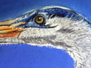 Heron Pastels - Blue Heron Close-up II by Teresa Vecere